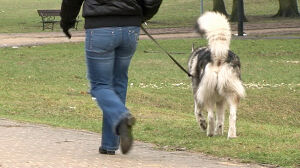Nie mogą wlepiać mandatów za niesprzątanie po psach