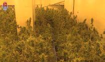 W dawnej siedzibie firmy <br />urządzili uprawę marihuany