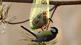 Jak dokarmiać ptaki? Pieczywo im szkodzi