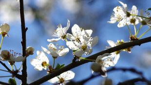 Prognoza na wiosnę w Europie powstała w USA. W Polsce Wielkanoc lokalnie ma być śnieżna