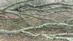 Wichury w Polsce. Połamane drzewa na ulicach, torach i samochodach