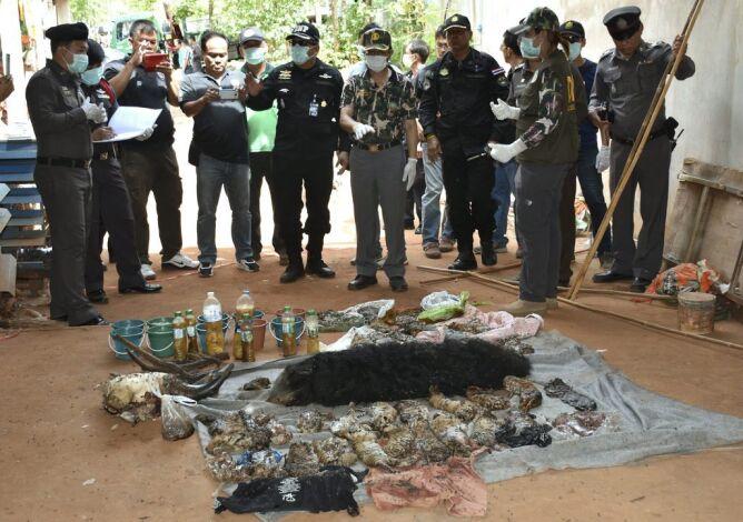 Ciała zwierząt znalezione w buddyjskiej świątyni w Tajlandii