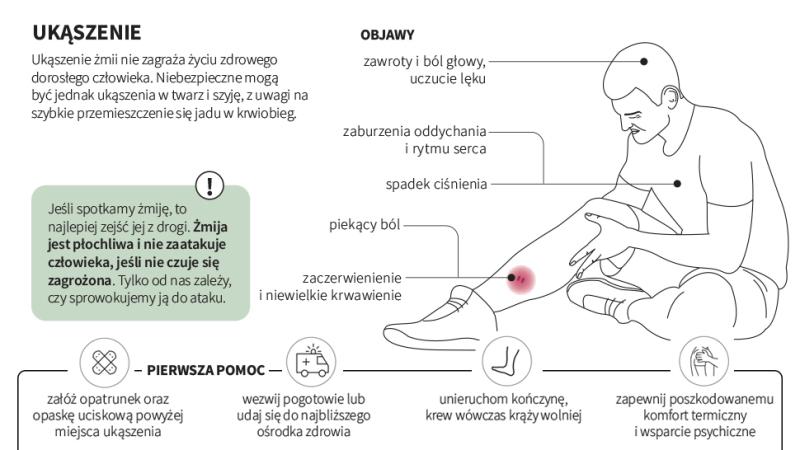 Działania po ukąszeniu (Maria Samczuk, PAP, lasy.gov.pl, ekologia.pl)